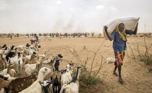 A man carries animal feed in Ethiopia on April 8, 2016. (AP Photo/Mulugeta Ayene)