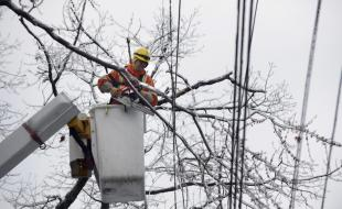 A Toronto Hydro worker uses a chainsaw to clear branches from around power lines  on December 23, 2013. (Fred Lum/The Globe and Mail)