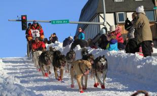 Iditarod champion Mitch Seavey drives his team through Anchorage, Alaska during the ceremonial start of the 2014 Iditarod Trail Sled Dog Race on  March 1. (AP Photo/Dan Joling)