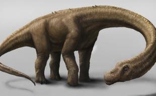 An artist's drawing of the Dreadnoughtus. (AP Photo/Carnegie Museum of Natural History, Mark A. Klingler)