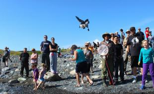 An Atlantic Puffin being released in Witless Bay, Newfoundland. (Photo courtesy of the Puffin Patrol Facebook page.)