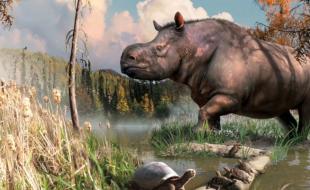 An artist's rendering of the ancient rhino, by Julius Csotonyi via MSN.