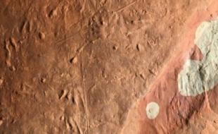 Fossilized trackway in the P.E.I. National Park. (Photo credit: Patrick Brunet)