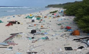 Plastic debris on East Beach, Henderson Island. [Photo by Jennifer Lavers]